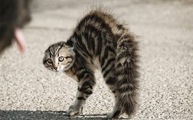 Кошка шипит на хозяина: причины, как понять, что делать